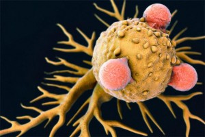 Halts Cancerous Cell Growth